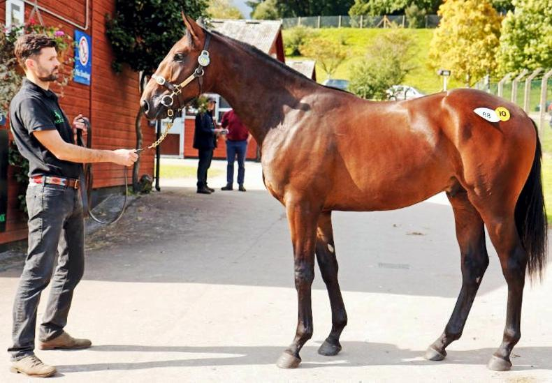 Promising yearling debut at Ascot