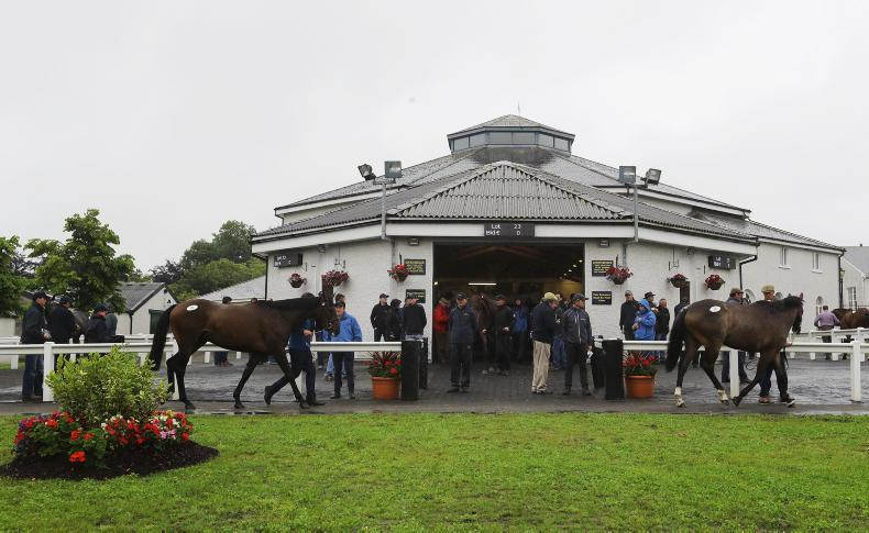 €60,000 Rock Of Gibraltar tops Part II of September Yearling Sale