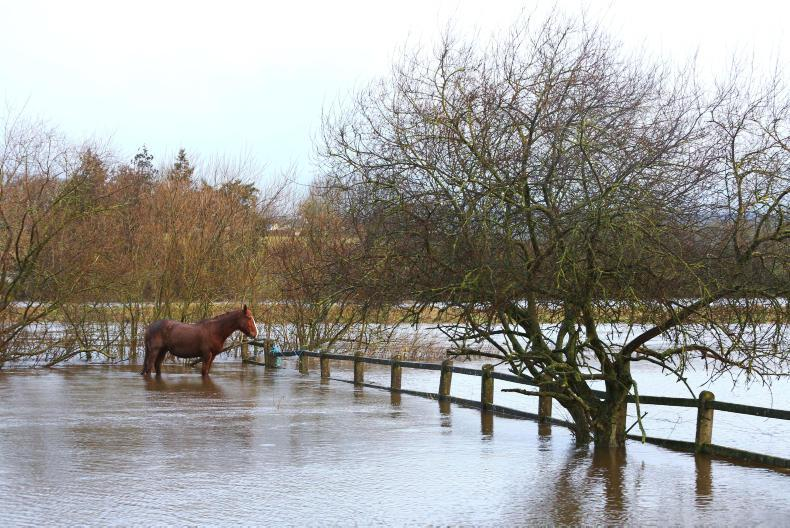 NEWS:   Plan ahead to avoid fodder shortages