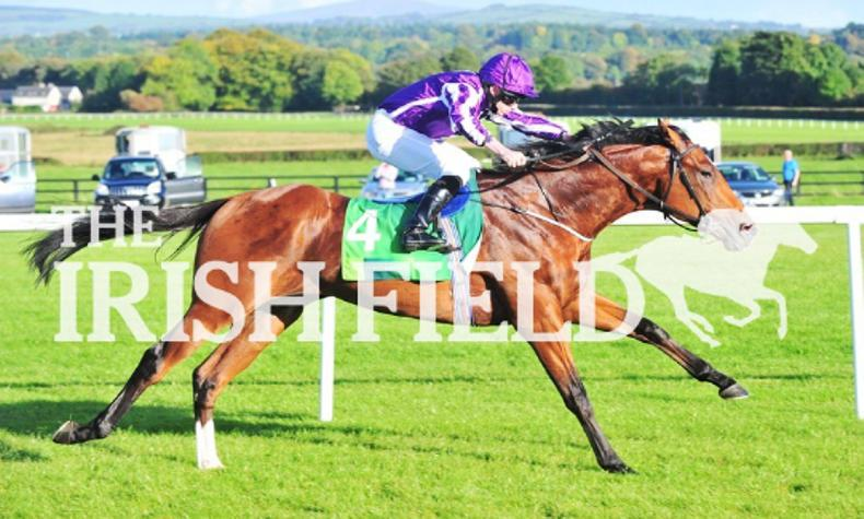 Saxon Warrior stakes his Derby credentials at Naas