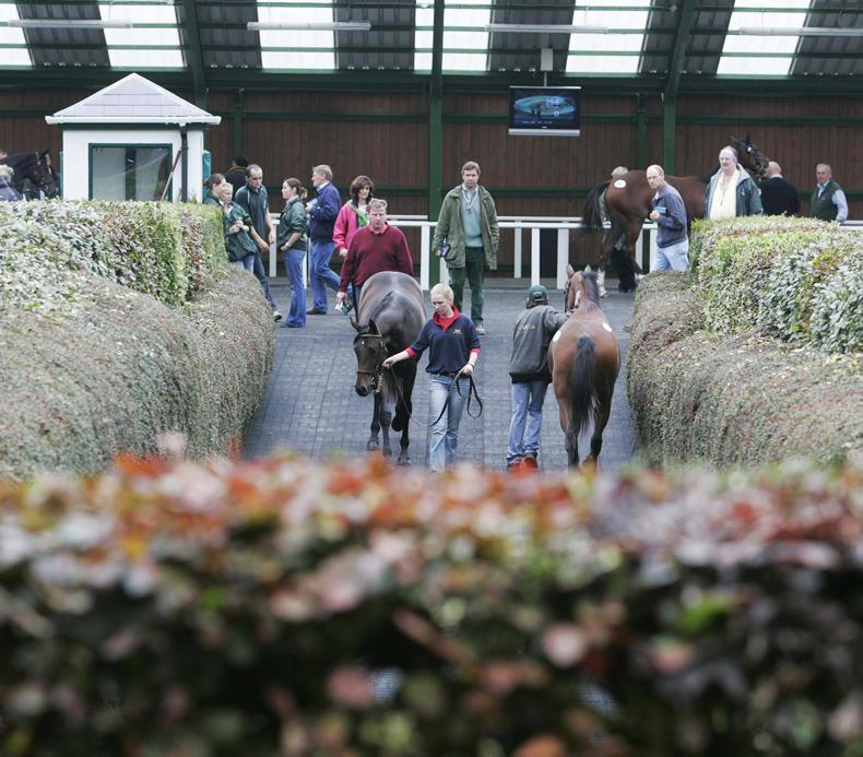 Godolphin buys €1.2 million Galileo filly at Goffs Orby Sale