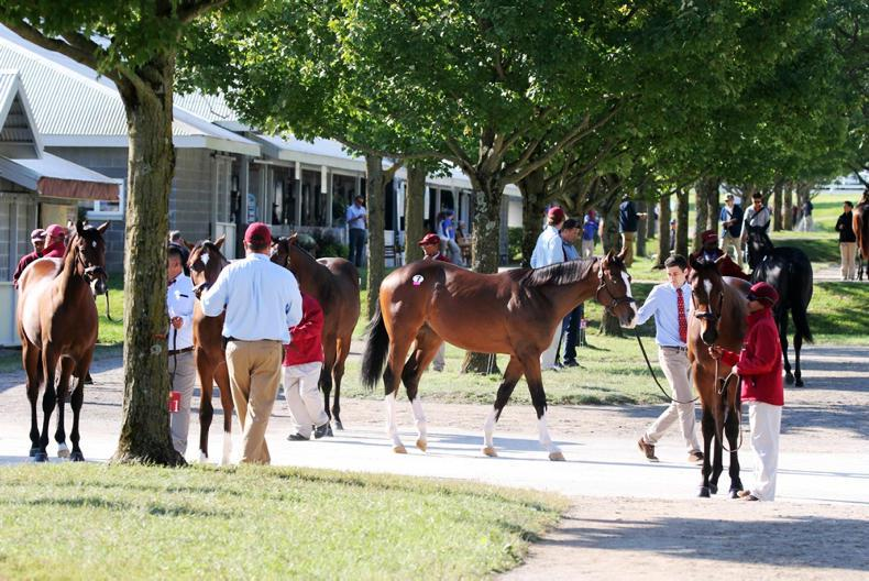 SALES: New heights reached at  Keeneland