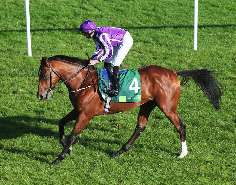Potential and pedigree to become an equine superstar
