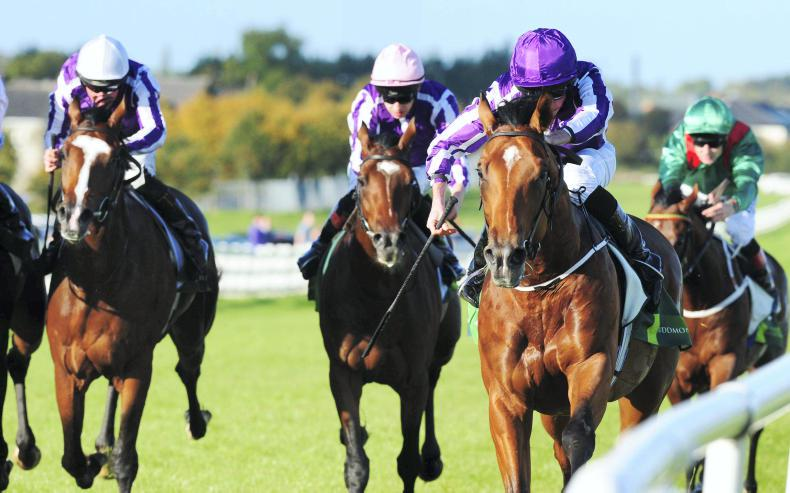 NAAS SUNDAY: Saxon Warrior continues O'Brien's Beresford