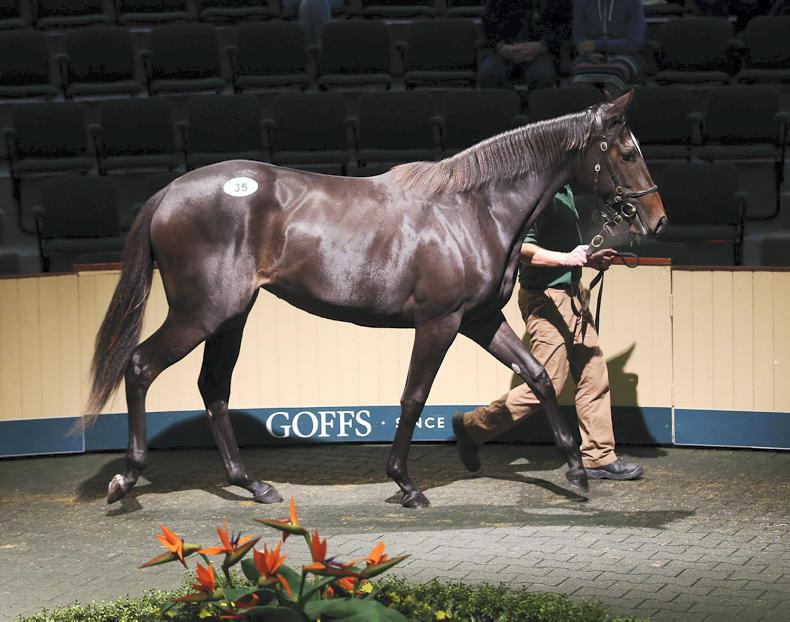 GOFFS ORBY: Landmark sale to Godolphin of Galileo progeny