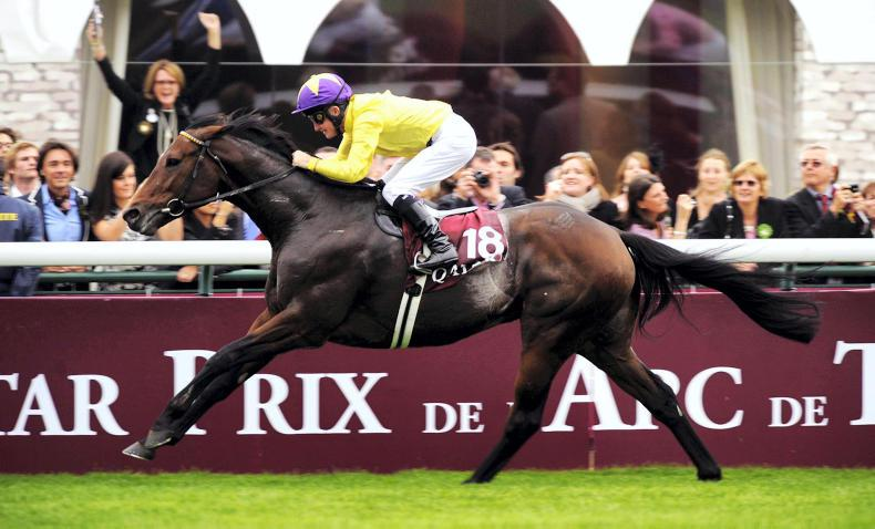 SALES: No shortage of talent by leading sires