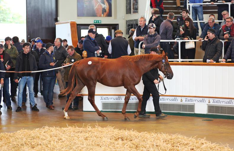 VIDEO: 2.6 million Dubawi stars on day one of Tattersalls October Yearling Sale