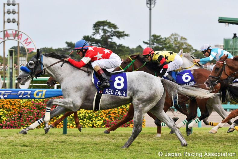 JAPAN:  Falx is Red hot in second Sprinters crown