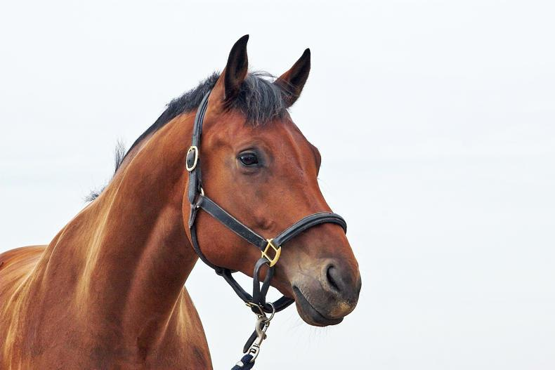 HORSE SENSE: What should you do before bringing your horse back to work?