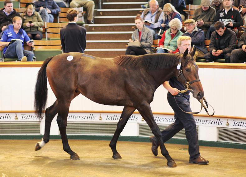 VIDEO: Coolmore buys Dubawi colt for 2 million guineas