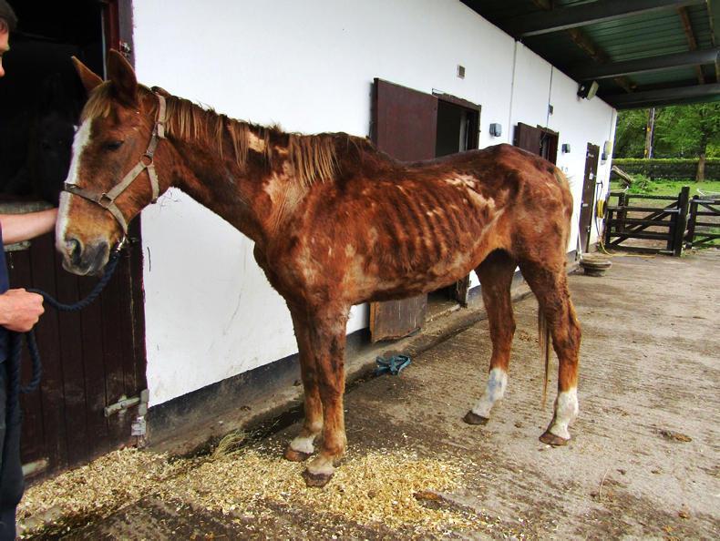 NEWS:  Zero tolerance towards animal cruelty - Doyle