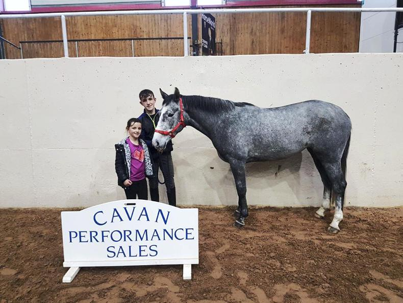 CAVAN SALES:  Swedish buyers drive pony trade at Cavan