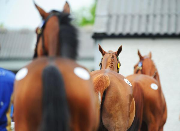 Slaughter figures fall as horse seizures increase