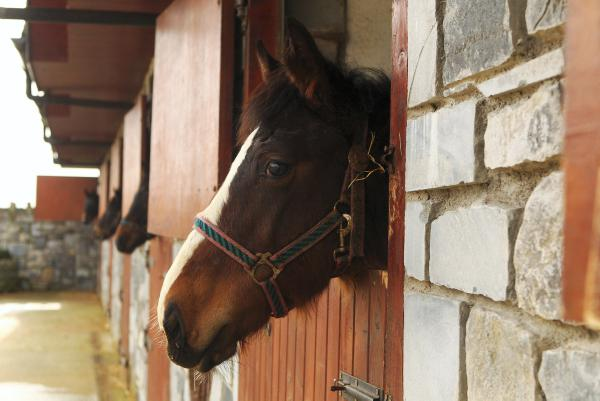 Con man still targeting horse sellers