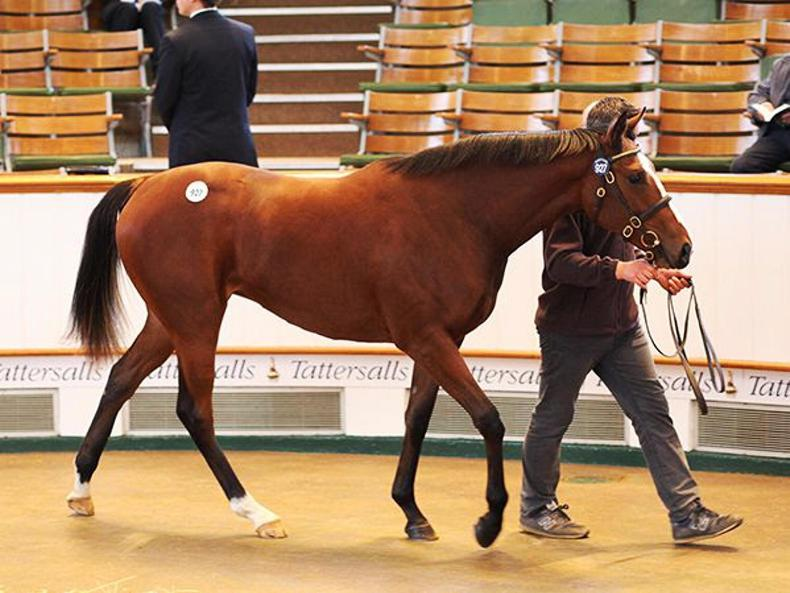 TATTERSALLS OCTOBER BOOK 2: Fillies shine as new high is set