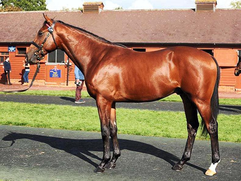 TATTERSALLS OCTOBER BOOK 2: Yeomanstown Stud's run of success