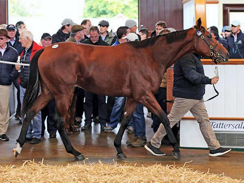 TATTERSALLS OCTOBER BOOK 2: Records smashed as appetite for yearlings continues
