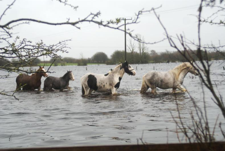 HORSE SENSE: Latest news and tips for equine safety as Ophelia approaches