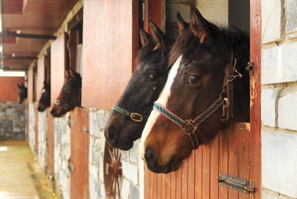 Eight stallions provisionally approved by HSI for 2014