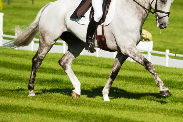 Two dressage stallions catch the eye at shows