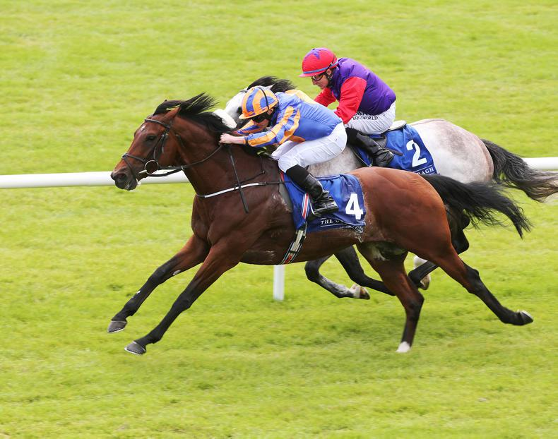 New format for five-day Foal Sale