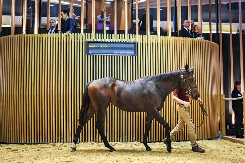 ARQANA OCTOBER SALE: Steady trade as record price set three times