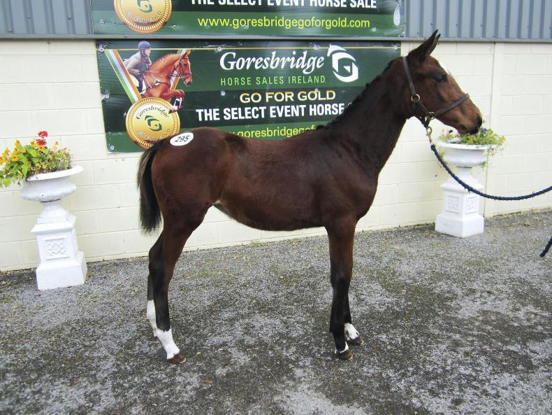 GORESBRIDGE SALES:  Sale-topping filly smashes foal records at €35,000