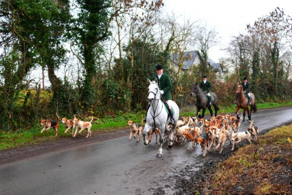 Ballymacad Foxhounds: A joy to watch