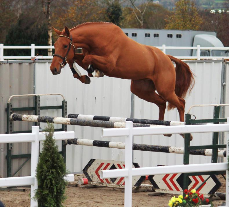 EQUINE SUMMIT: Focus on sport horse market