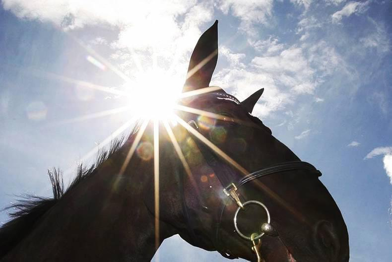 COMMENT:  No hiding place for those who neglect horses