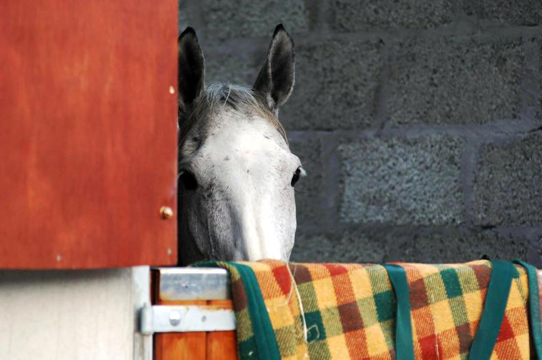 HORSE SENSE: Take extra care of animals as Halloween approaches