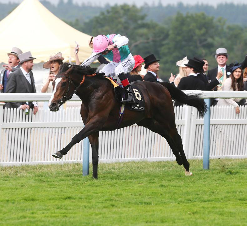 French St Leger wins brings joy to Carlow