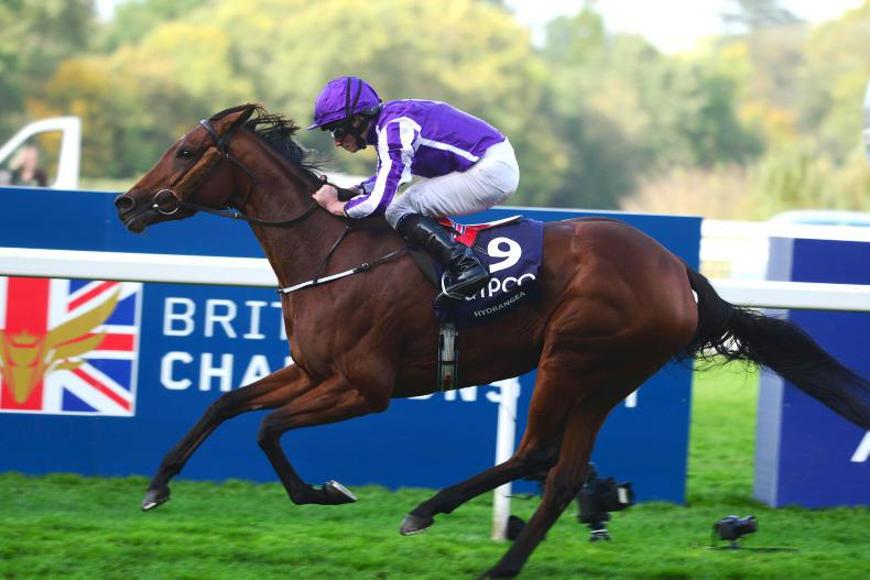PEDIGREE NOTES: Group 1s for Dark Angel, Frankel, Galileo, Mount Nelson & Nayef