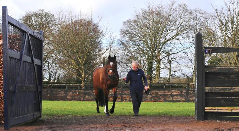 Caravaggio, Churchill and Highland Reel to stud next year