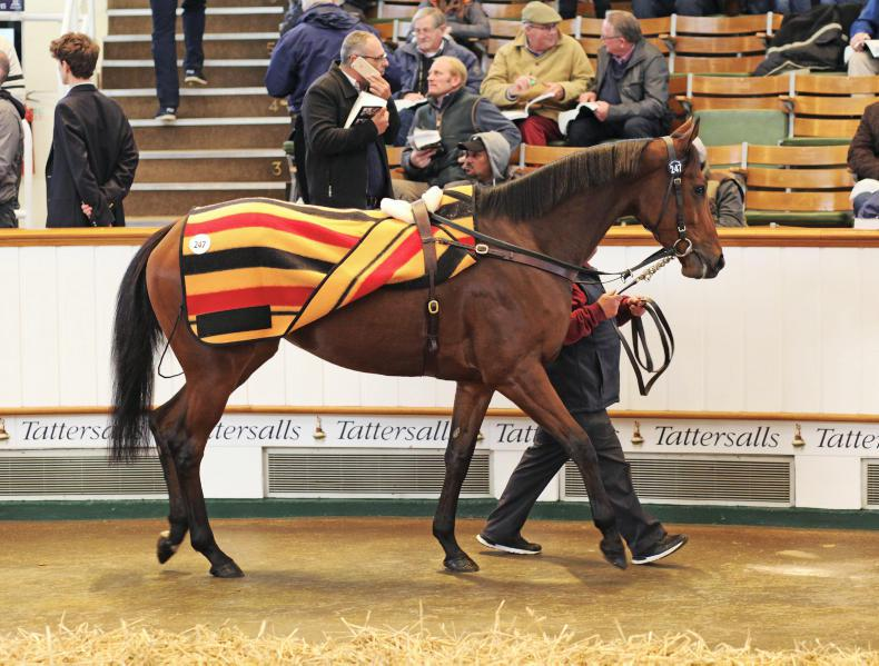 VIDEO: Elizabeth Browning sold for record sum at Tattersalls