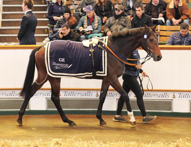 TATTERSALLS HORSES IN TRAINING SALE: Low-key conclusion to a sterling week