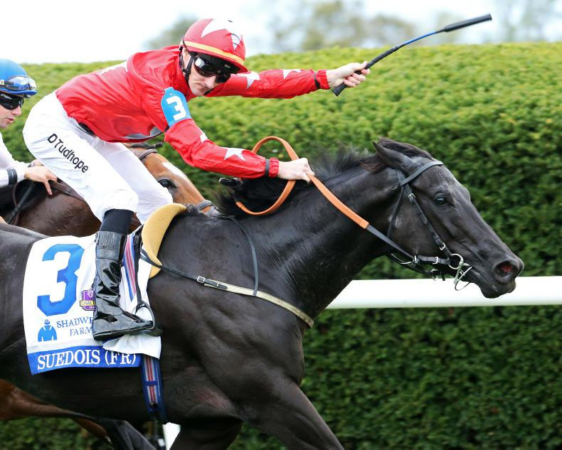 BREEDERS' CUP: Speed can see Suedois home