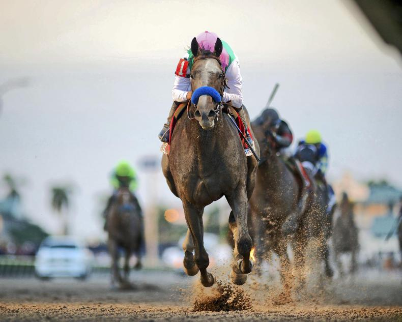 BREEDERS CUP: Gun Runner on a roll