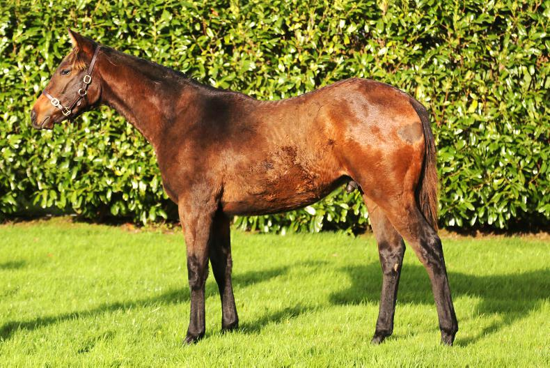 Quality flat foals at Tattersalls Ireland next Friday