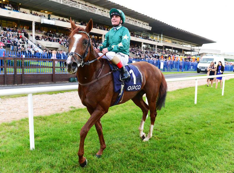 Decorated Knight to stand at Irish National Stud