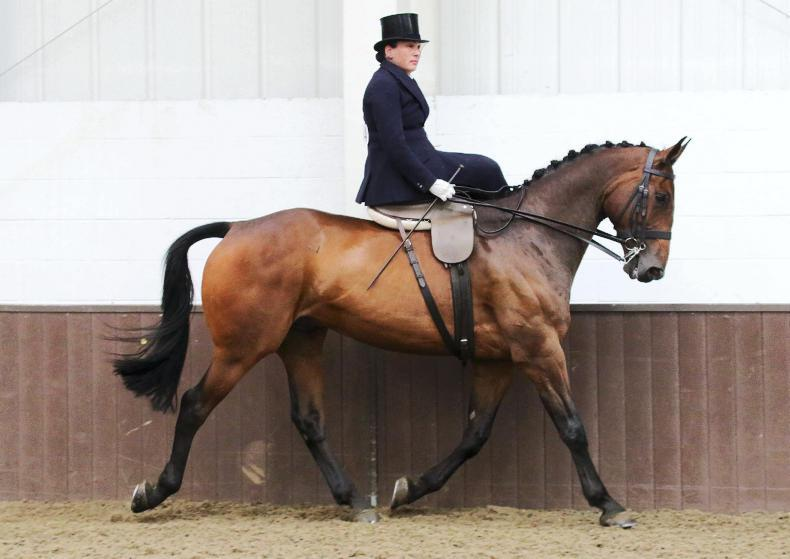 PONY TALES:  Shirley joins judging panel