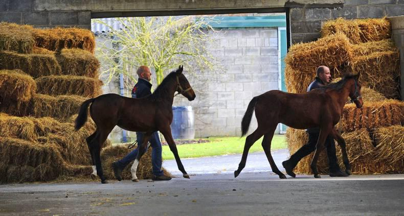 Four-day foal sale ends with substantial gains overall