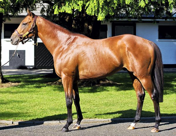 Gale Force Ten to stand at Irish National Stud