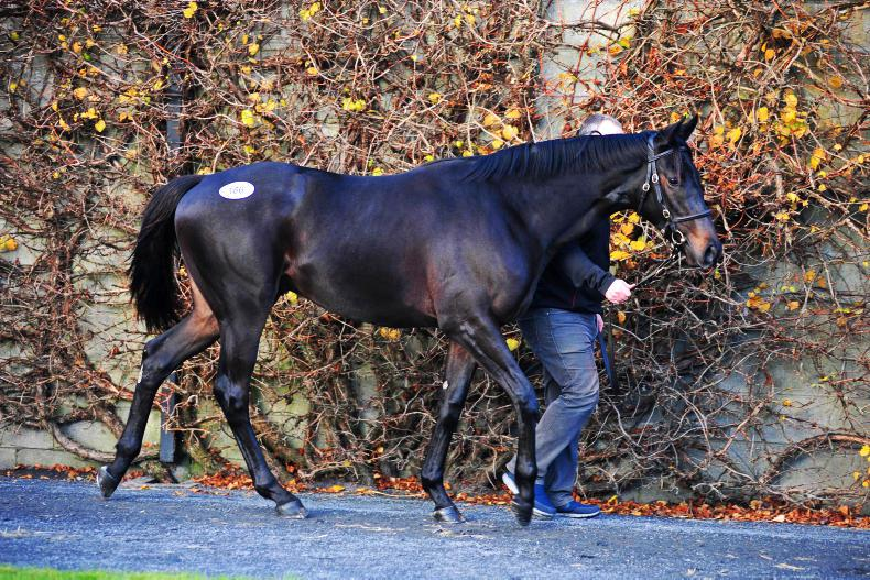 TATTERSALLS NH SALE: Martaline offspring top yearling trade