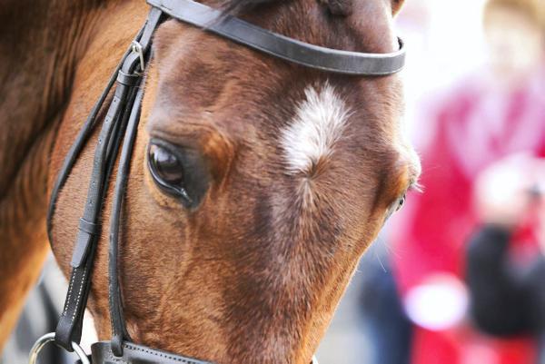 Irish mounted games team set to take on World Championships