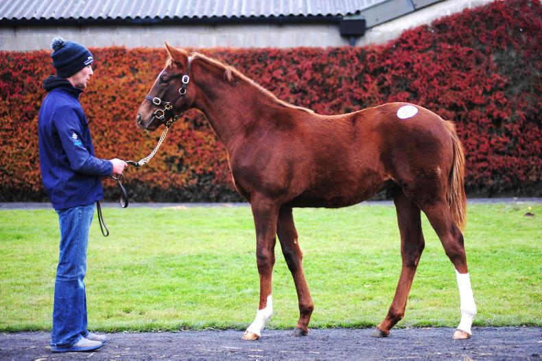 TATTERSALLS NH SALE: Ryan McElligott's selected lots