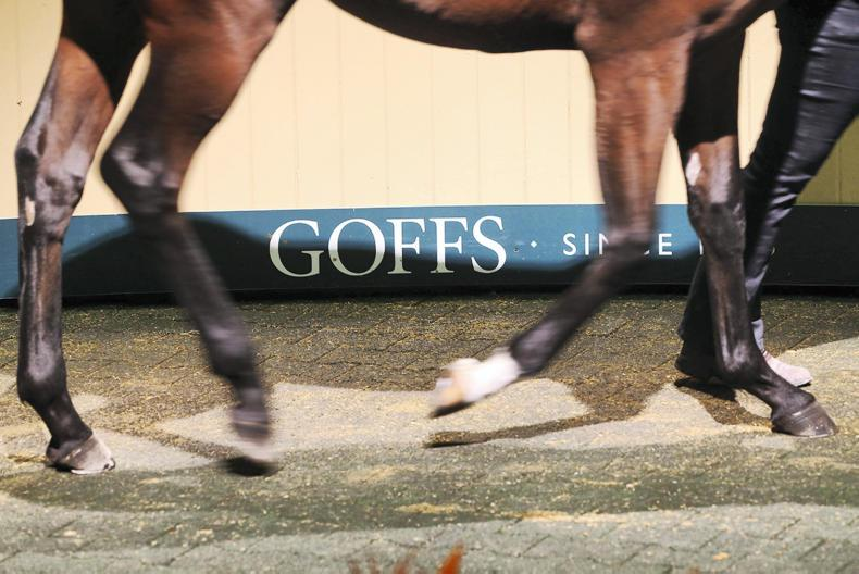 Bright start for new-look Goffs November Foal Sale