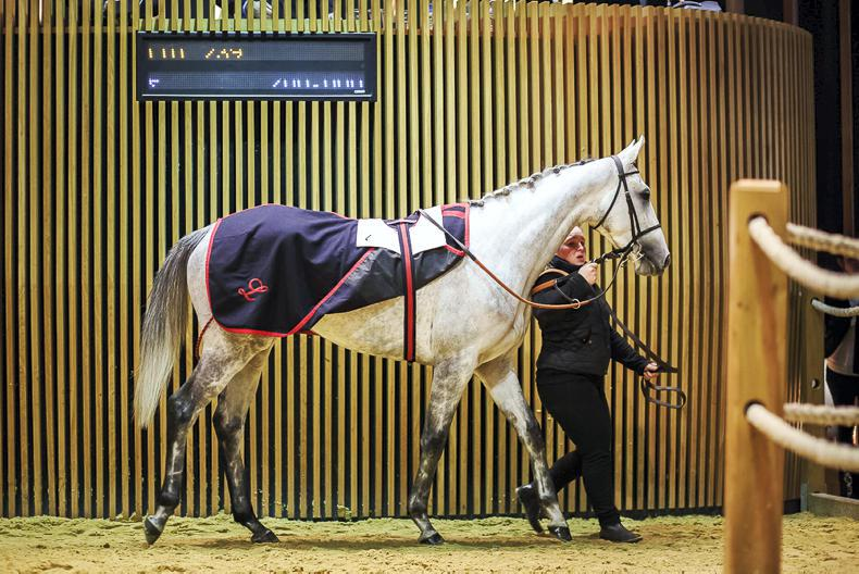 ARQANA AUTUMN SALE: Elimay earns McManus approval