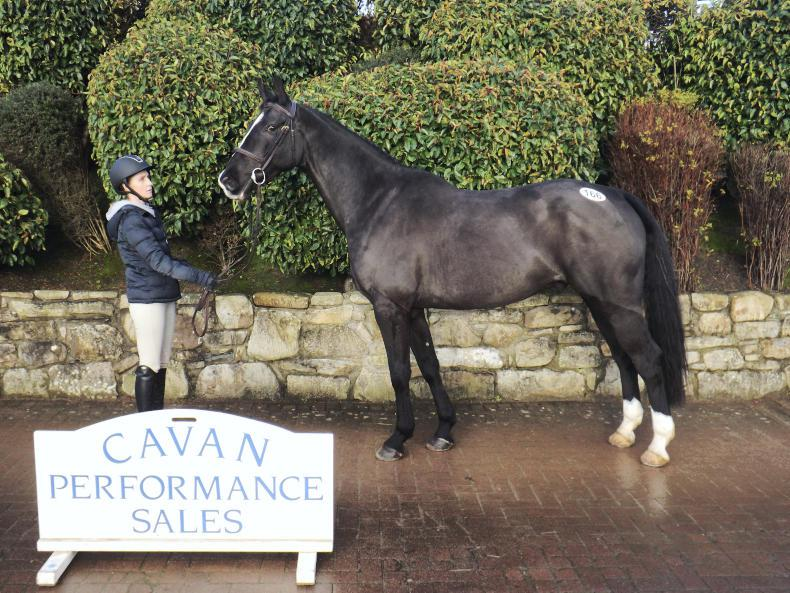 CAVAN SALES:   Mermus R gelding tops sale at €15,300