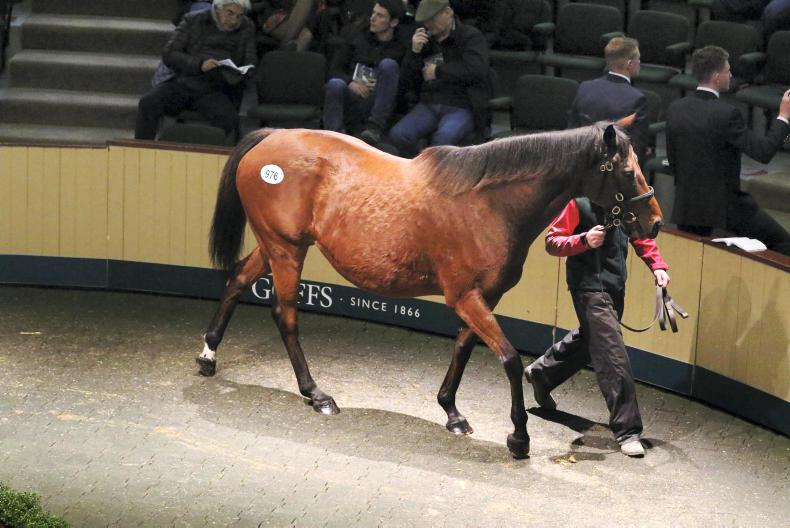 GOFFS BREEDING STOCK SALE: Bolger mare goes tops Friday session